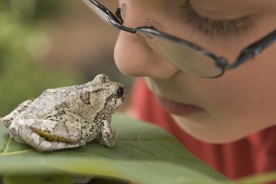 Boy with tree frog