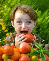 Saving tomatoes