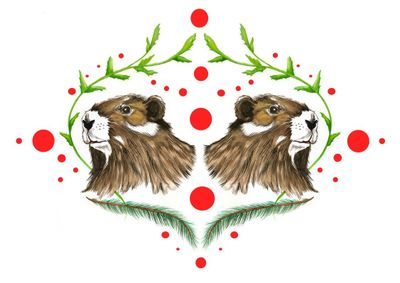 The endangered Vancouver Island Marmot