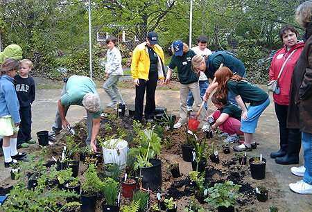 Montlake-planting