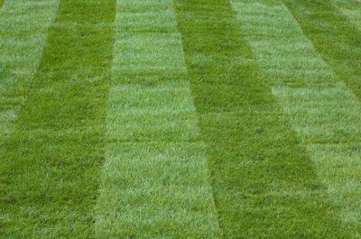 Field turf