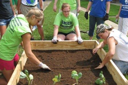 Brescia planting