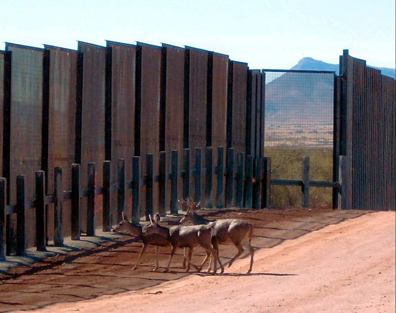 Deer at wall