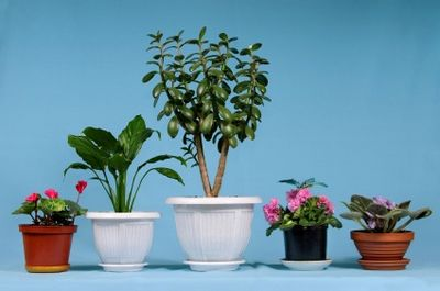 Potted plants make great gifts