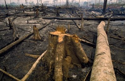 Deforestation has made Indonesia the third largest greenhouse gas emitter