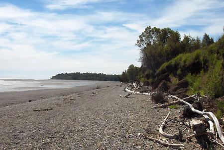 Beluga-beach