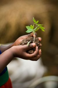 Kenya's Green Belt Movement planted millions of trees