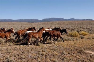 Horses running in Montana
