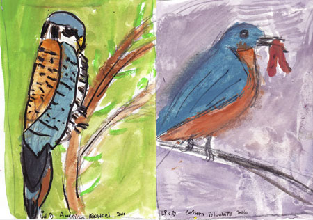 Kestrel-and-bluebird