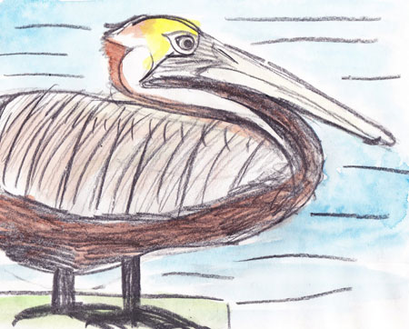 Pelican-by-Olivia