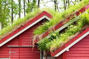 Let grass grow on your roof