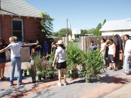NM Plotting the new garden
