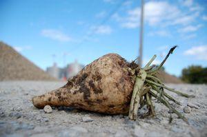Monsanto beets.jpg