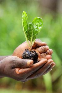 Community gardens provide healthy food options