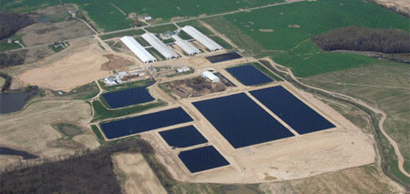 CAFO-with-sewage-lagoons