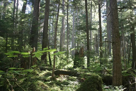 Tongass-forest-scene