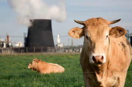 Livestock and pollution