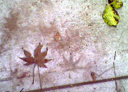 Leaf onsidewalk