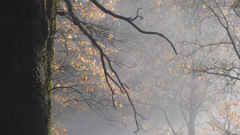 Yosemite_trees2