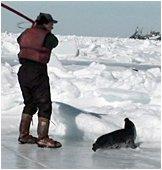 Seals_home_seal_killing_2005_05