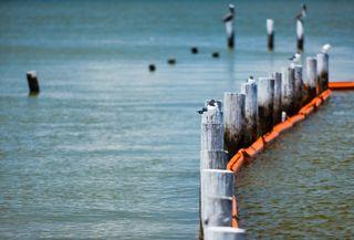 Pelicans oil boom