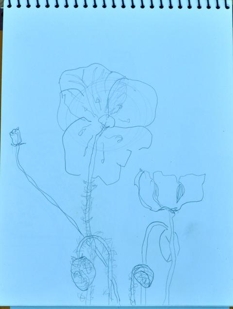 Poppydrawing