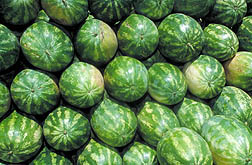 Watermelon090520