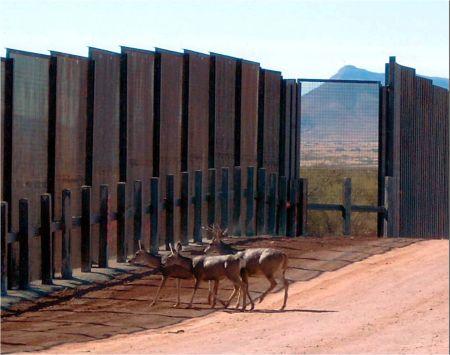 Deer blocked by wall