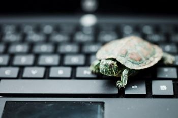 The JFK turtles take twitter by storm