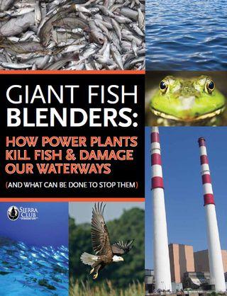 Fish_blender