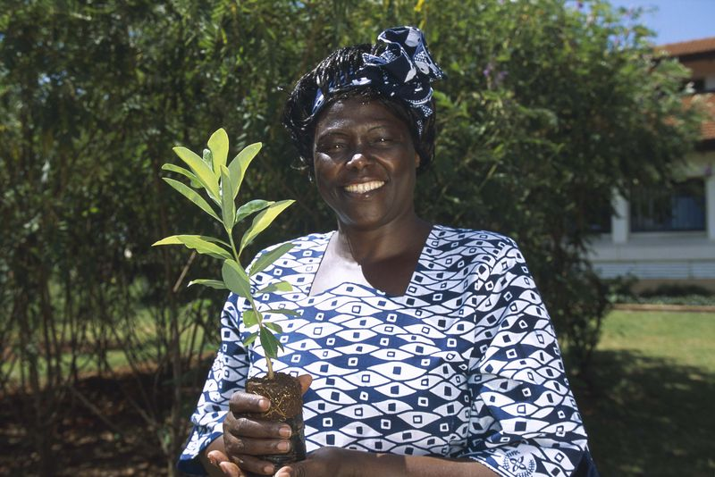 Prof Maathai with seedling