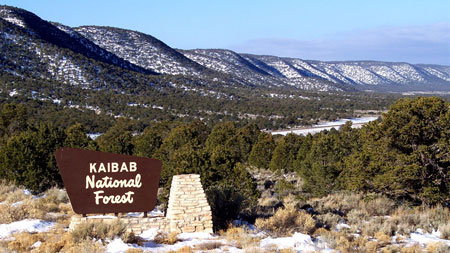 Kaibab-National-Forest-AZ