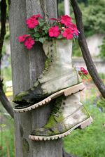 Boot plant