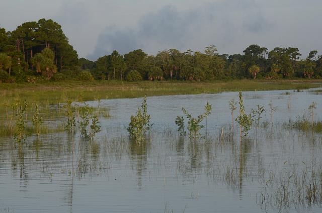 Northern everglades USDA lance chueng