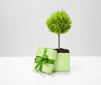A tree is a gift