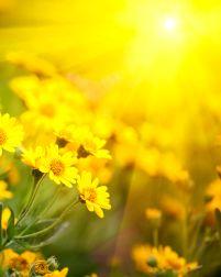 Sunny_flowers2
