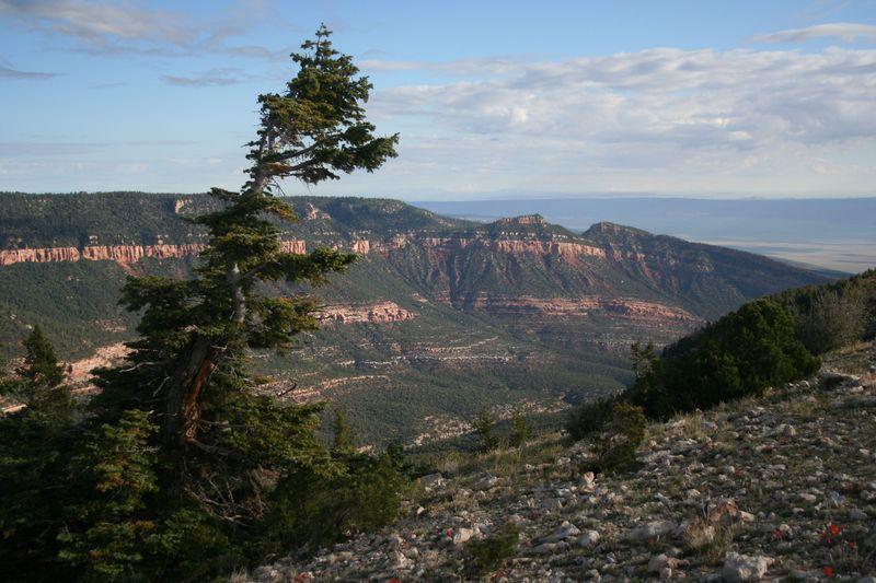 North Canyon Kim Crumbo