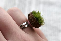 Live moss ring