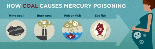 Mercury_pregnant_img