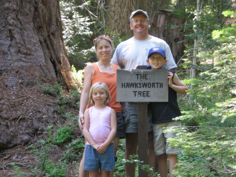 Hawksworth Tree 2008