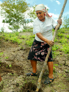Digging-in-Limay