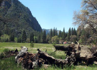 Meadow in Yosemite