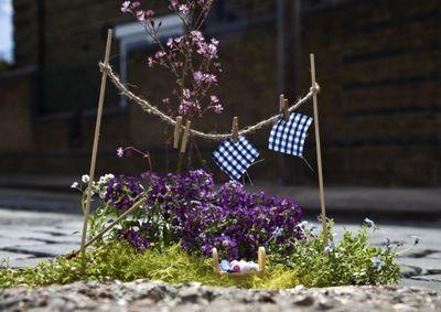 Clothes-line-garden