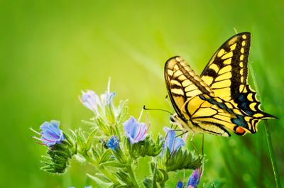 Butterfly iStock_000017690888XSmall