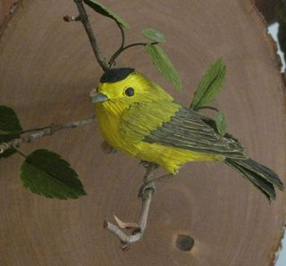 Wilsons warbler photo by debare