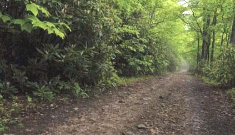 Doe-Mtn-road