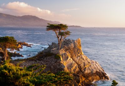 Lone Cypress Monterey Peninsula
