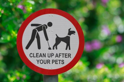 Pet poo clean up