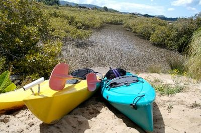 Kayaks in a mangrove