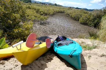 Kayaks in a mangrove
